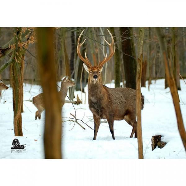 Tierauflage Hirschrudel im Winterwald, 59 x 84 cm
